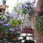 Spello courtyard - with hanging plants