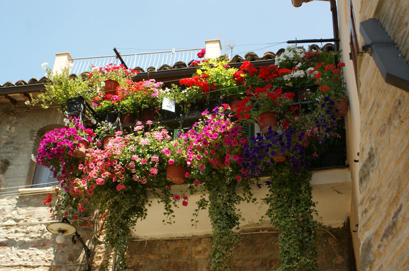 Floral passione takes over spello annesitaly annesitaly for Spell balcony