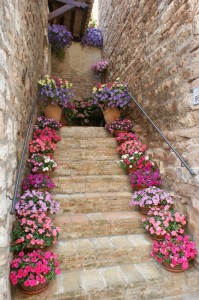 Spello steps up a flower-lined alleyway
