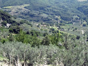 Valley below Collepino once farmed by village people