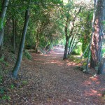 Woodland path near the place where St. Francis arrived on the island