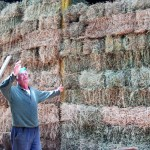 Che-vittoria---half-of-the-hay-in