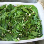 Chicory-must-be-cleaned,-then-washed-well